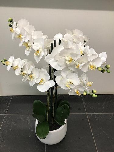 Artificial Orchid 6 Spray