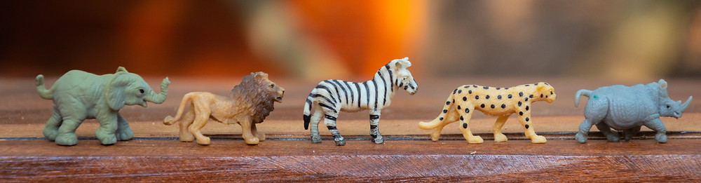 A row of jungle animal figurines: an elephant, lion, zebre, cheetah and rhino