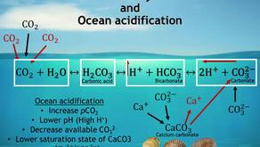 Corals in Acidifying Oceans