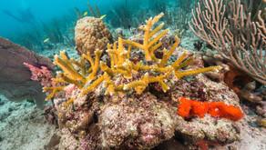 Coral Reef Restoration Analysis