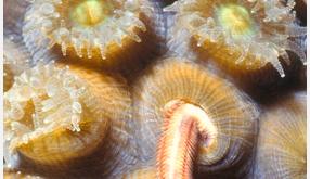 Coral Heterotrophy