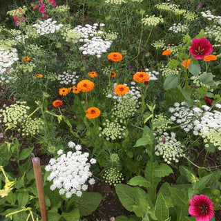 Annuals for Colour and Cutting
