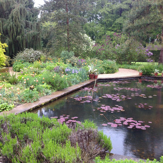Hidcote Pool