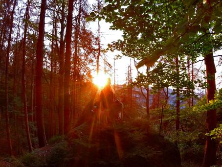 FOREST | Idyllic Vibes in the Sächsische Schweiz