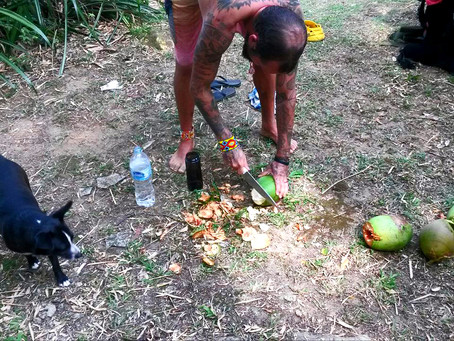 SURVIVAL   Coconuts on the way
