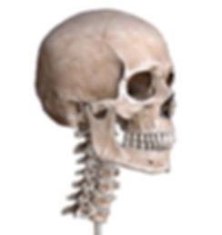 skull on neck web.jpg