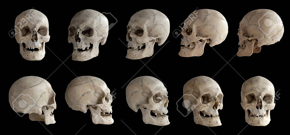 skull from every angle.jpg
