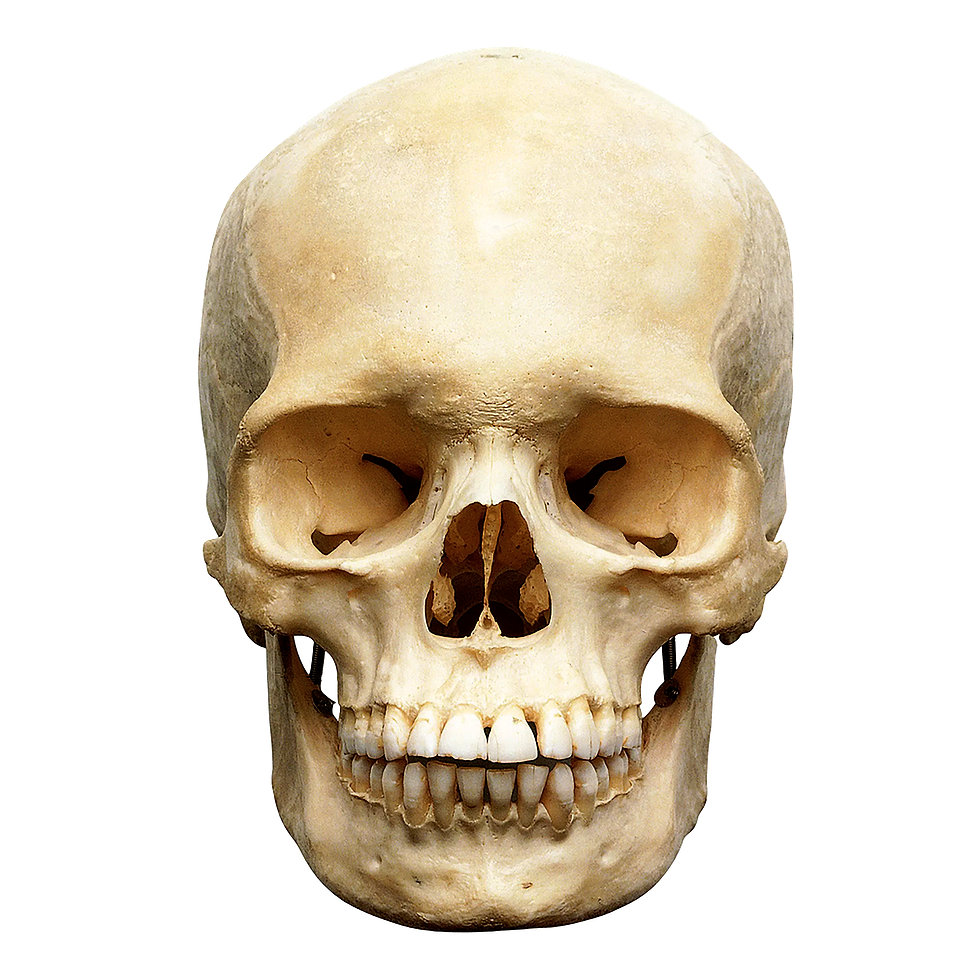 skull front.jpg