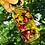 Thumbnail: Glow Oil (Oily Skin)