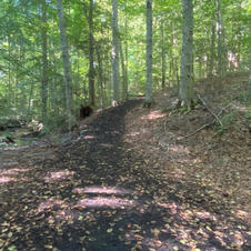 The woods trail on the Lower 5K Course