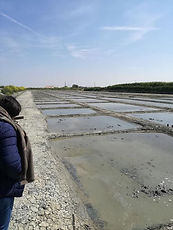 Marais salant Loix île de ré