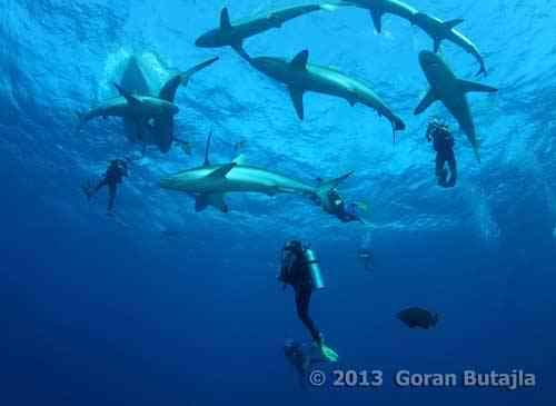 jardines_cuba_sharks.jpg
