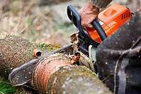 Emergency tree felling services