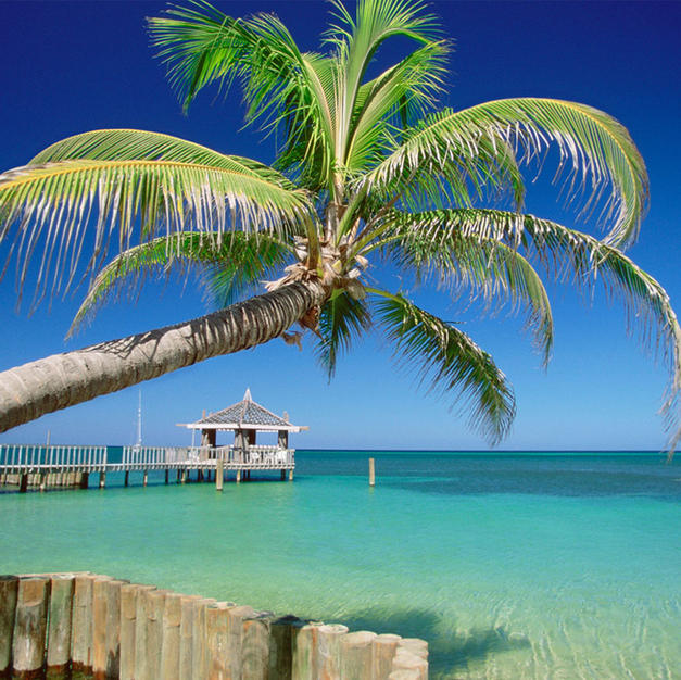 Energize in Paradise