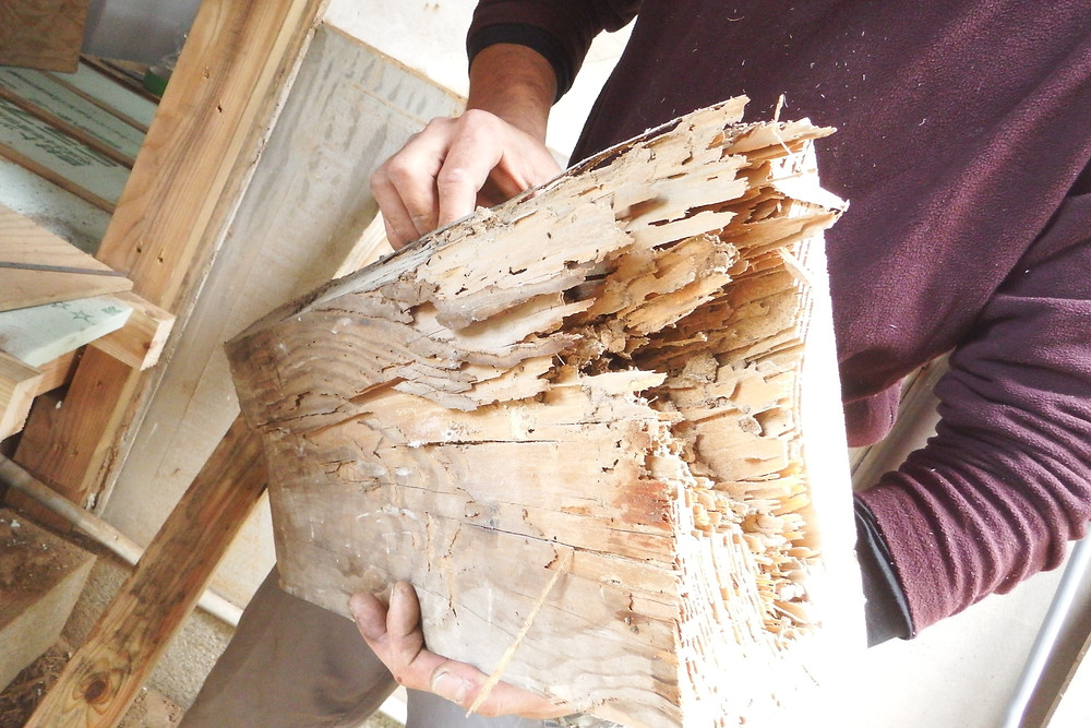 シロアリにやられてしまっている部分を入れ替え。断面はこんなにスカスカで持ち上げると崩れてしまいました。悪い部分だけをを治し再生できるのが木の家の良いところです。見た目以上に手間はかかりますがこのとおり。(三枚目真ん中の太い部分)家が喜んでいます♫