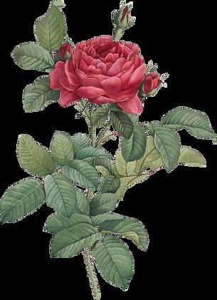 06_dark_pink_rose_graphicsfairy_edited.p