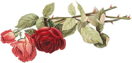 05_cut_red_pink_roses_graphicsfairy.png