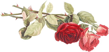 05_cut_red_pink_roses_graphicsfairy_edit