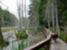Smuggler Cove Provincial Campground | access trail through wetlands | cycle touring Sunshine Coast