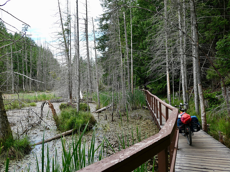 Trail into Smuggler Cove Provincial Campground, cycle touring the Sunshine Coast, north of Sechelt