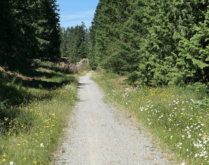 Cowichan Valley Trail | SW Shawnigan Lake | cycle touring south Vancouver Island