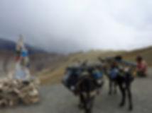 Thorn Nomad cycle touring bike | Thorn Nomad touring Ladakh | Thorn Nomad donkey trek