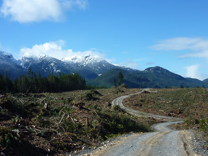 Logged over area near Pye Lake, NE of Campbell River. Bikepacking & cycle touring the backroads, north Vancouver Island