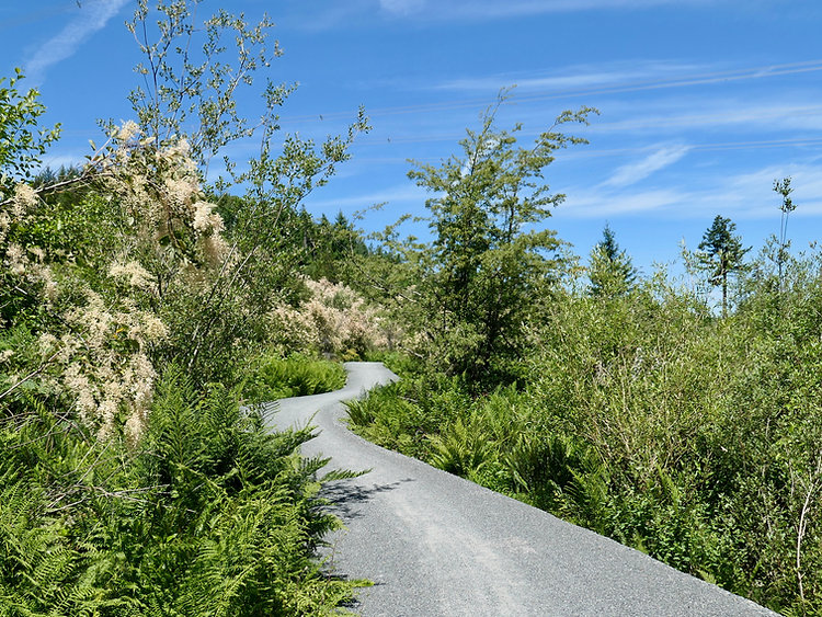 Sooke Hills Wilderness Trail | south Vancouver Island | cycle touring