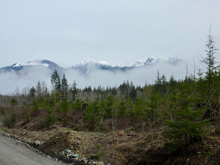 Airstrip Main beside the Salmon River | south of Sayward | cycle touring north Vancouver Island | bikepacking