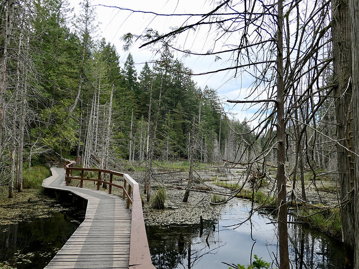 Wetlands trail into Smuggler Cove | cycle touring Sunshine Coast | Fav campground