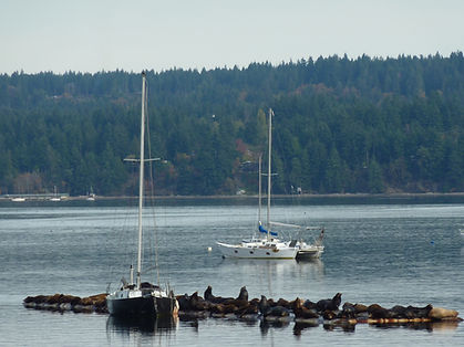 Fanny Bay sea lions, cycle touring Central Vancouver Island