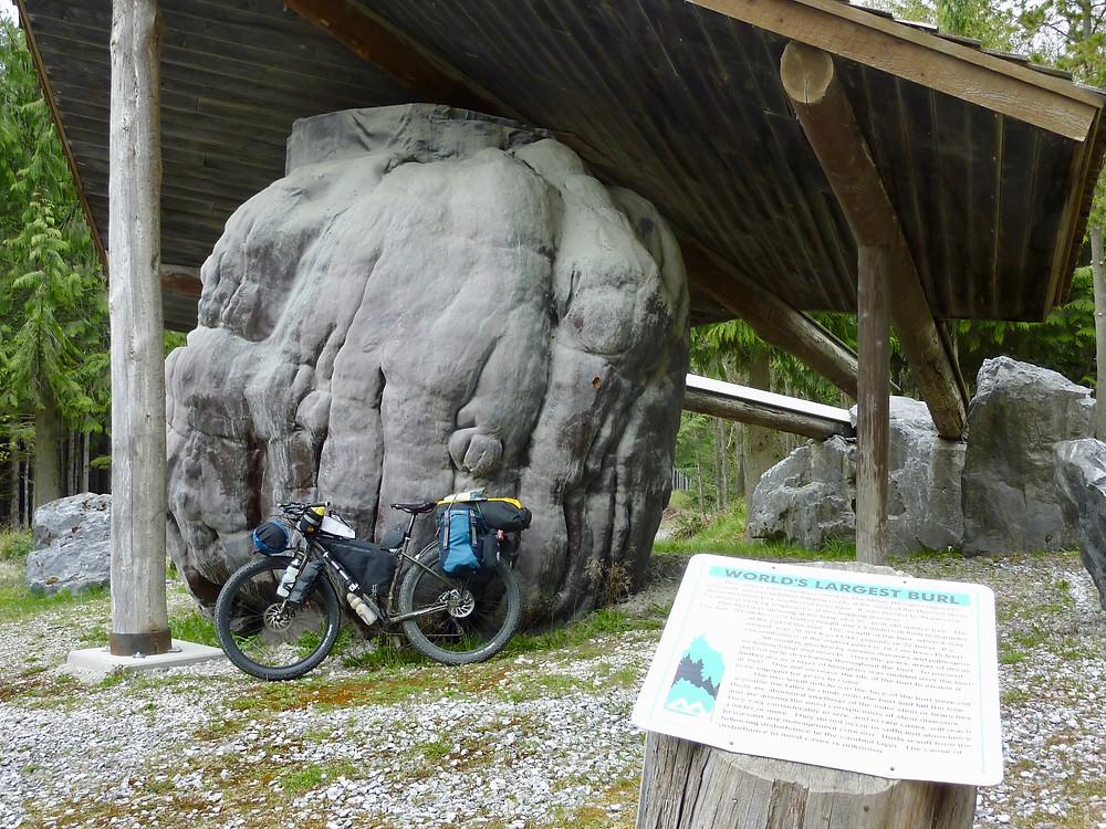 World's largest burl, north of Port McNeill