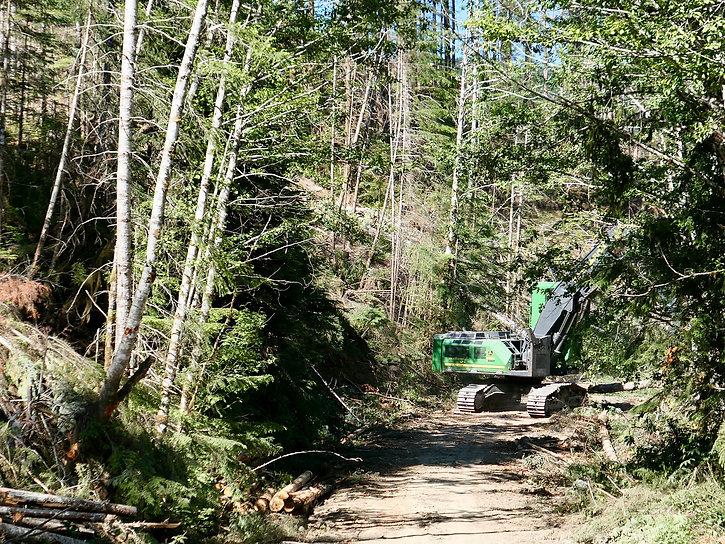 Active logging Old Port Renfrew Road | bikepacking south of Cowichan Lake