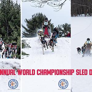 2020 Sled Dog Race - Laconia