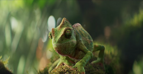 storyboarding a dancing chameleon for Berocca by MPC