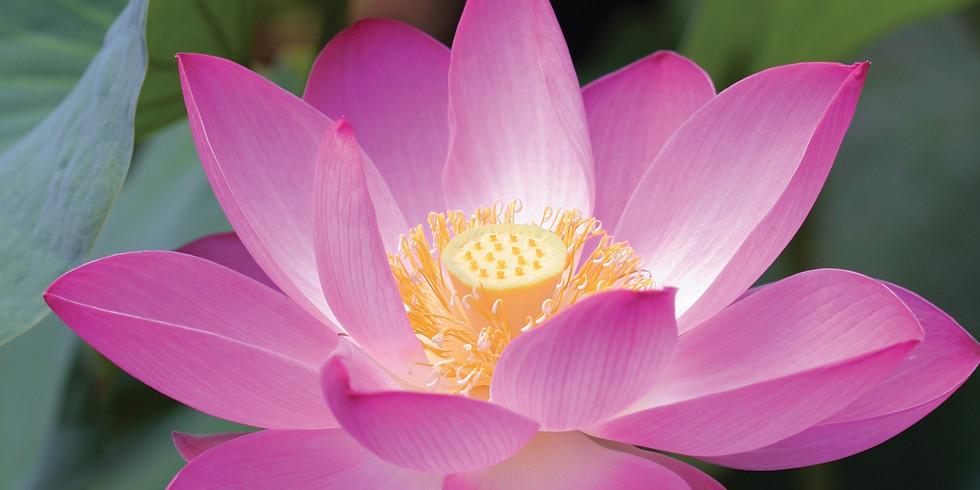 Fremont 2-Day Meditation Training Program (Free) (1)