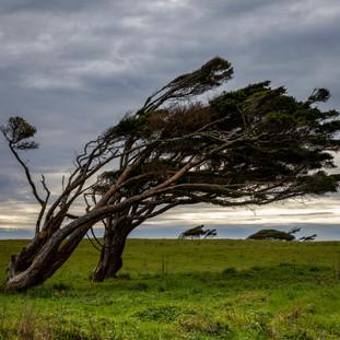 Wind beaten