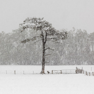 Southland Snow