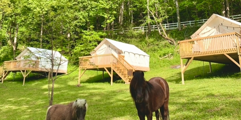A Glamping Yoga Retreat with Equine Friends