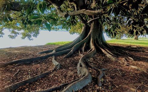 Tree-trunk-roots_2880x1800.jpg