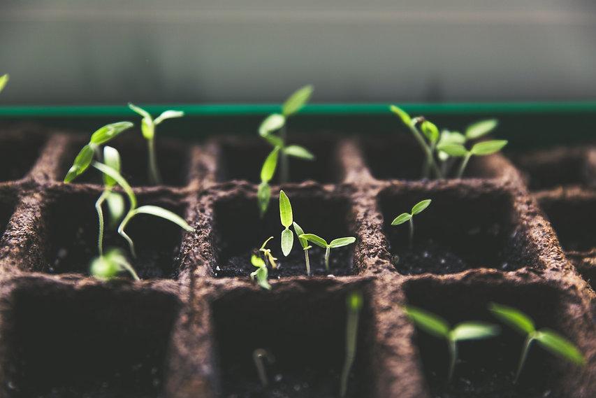 Fresh Seedlings 1.jpg