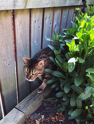 Gizmo investigating the garden 2.jpg
