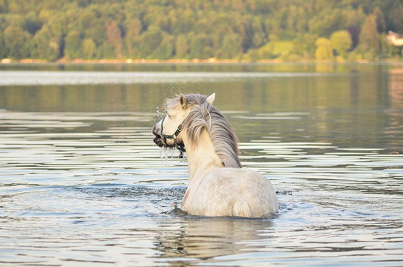 Pferd vergnügt im Wasser
