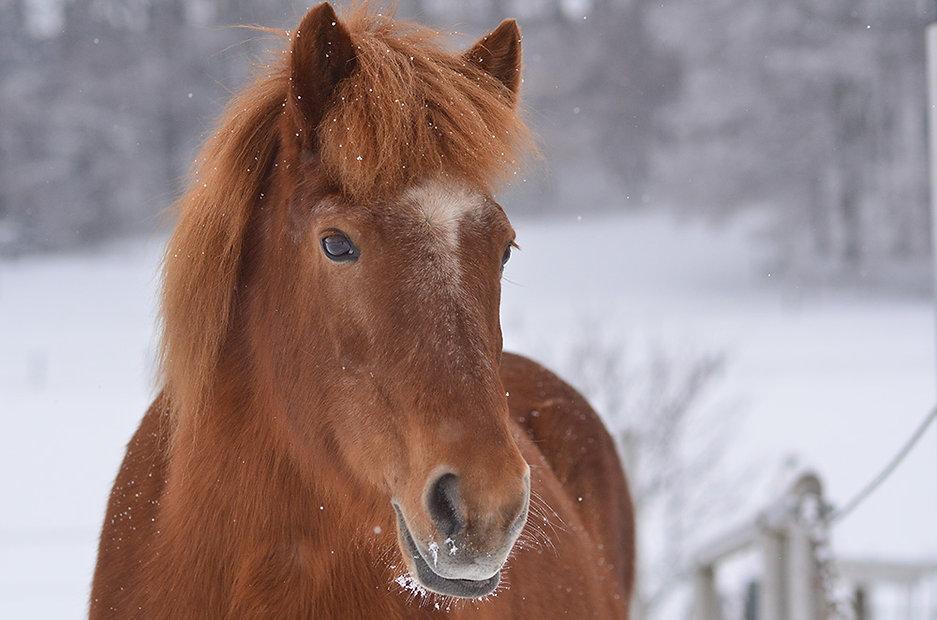 Pferd in Winterlandschaft