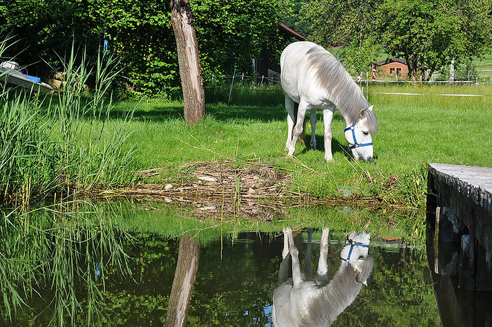 Pferd frisst am Seeufer