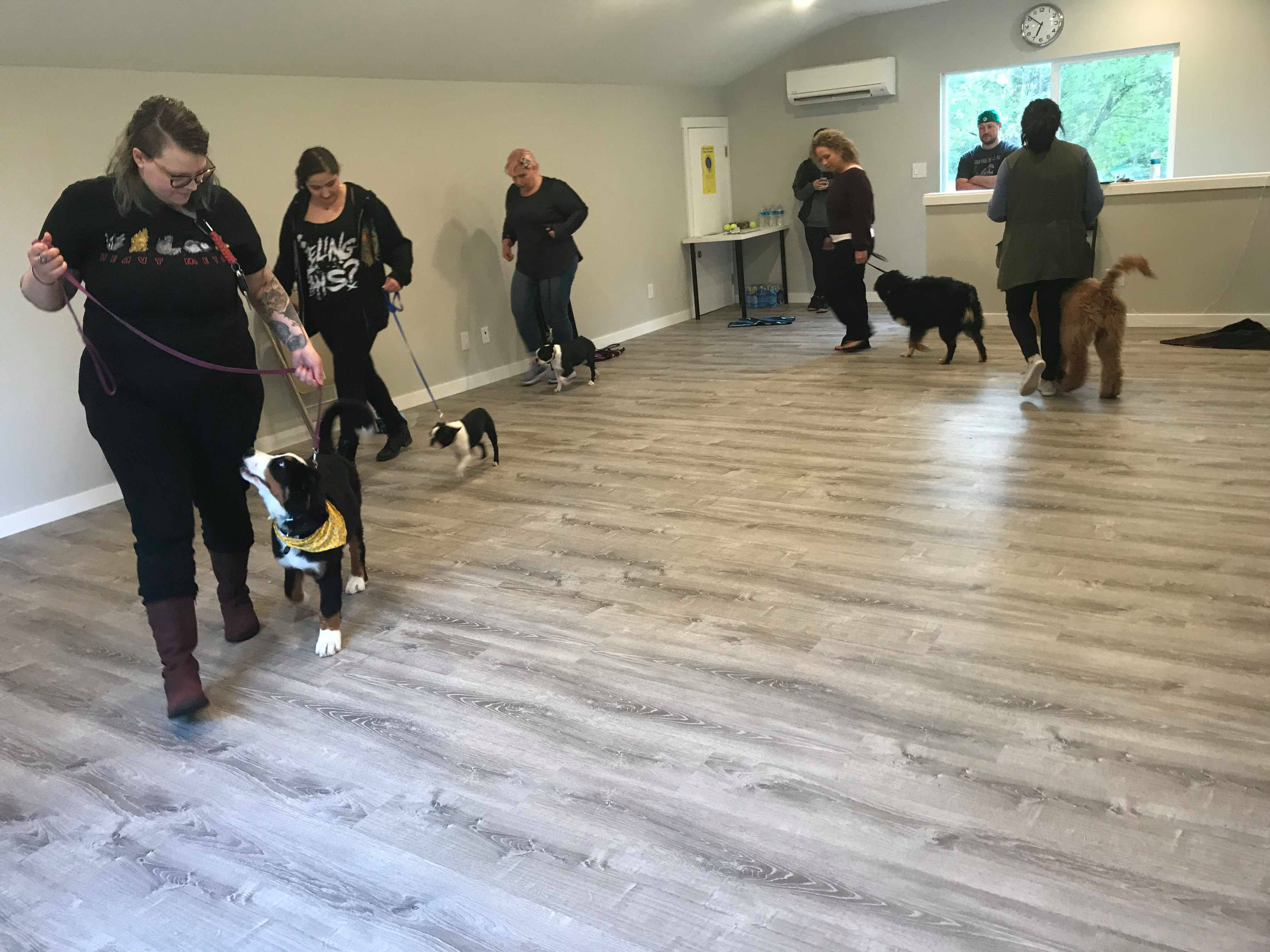 Basic Obedience Group Class
