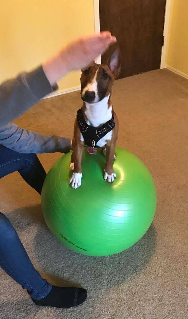 Canine Conditioning Drop-in