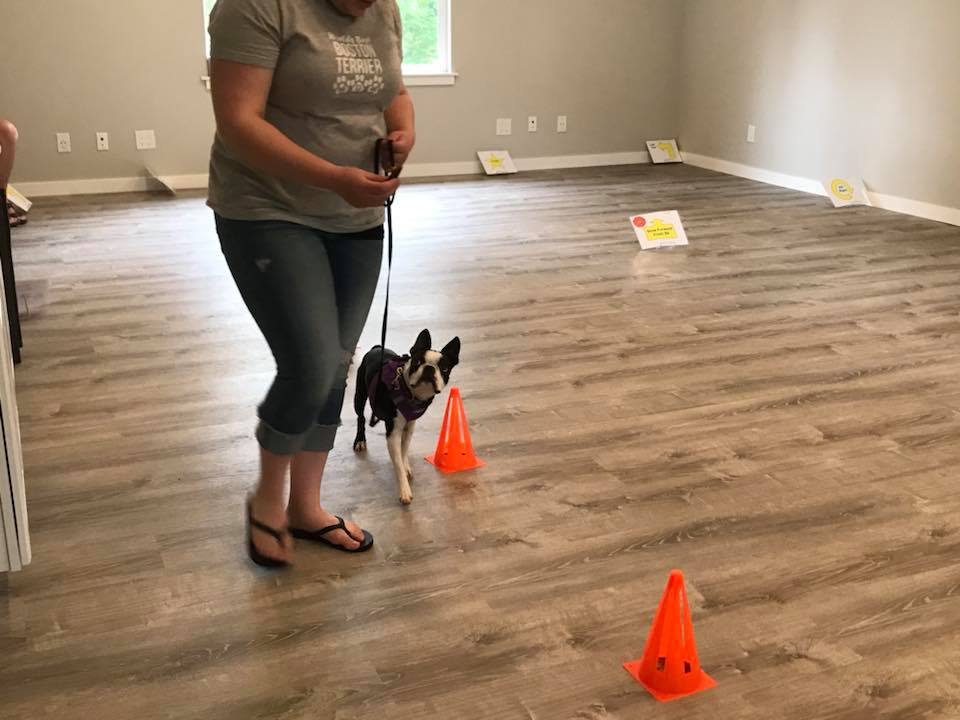 Rally Obedience - Drop-In