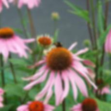 tuinparklaan3.jpg