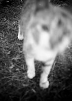 Requiem. Cat.jpg